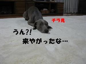 Img_1557_2