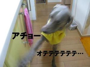 Img_2040_2