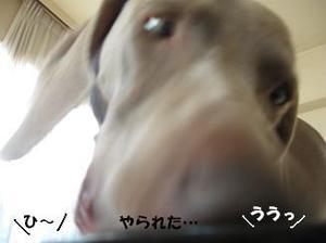 Img_2330_2